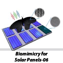 biomimicry-solar-panels
